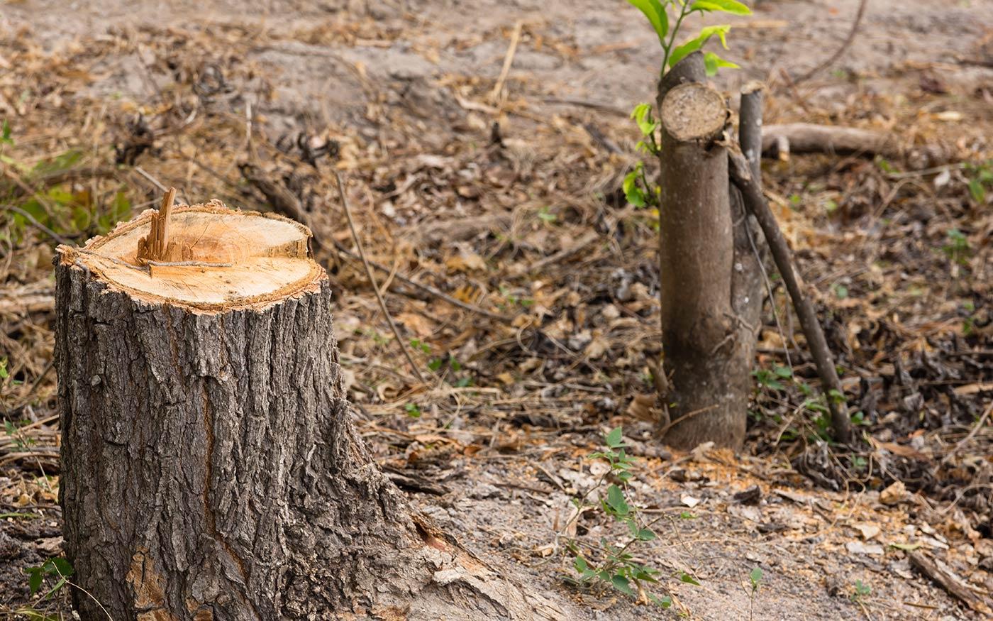 Határozott fellépés szemetelés és engedély nélküli fakivágás miatt
