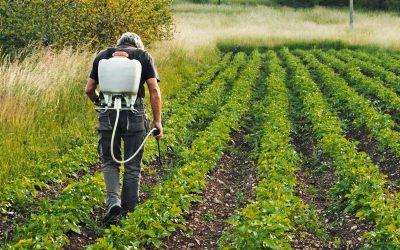 Kormányzati portál segíti a mezőgazdasági idénymunkát keresőket