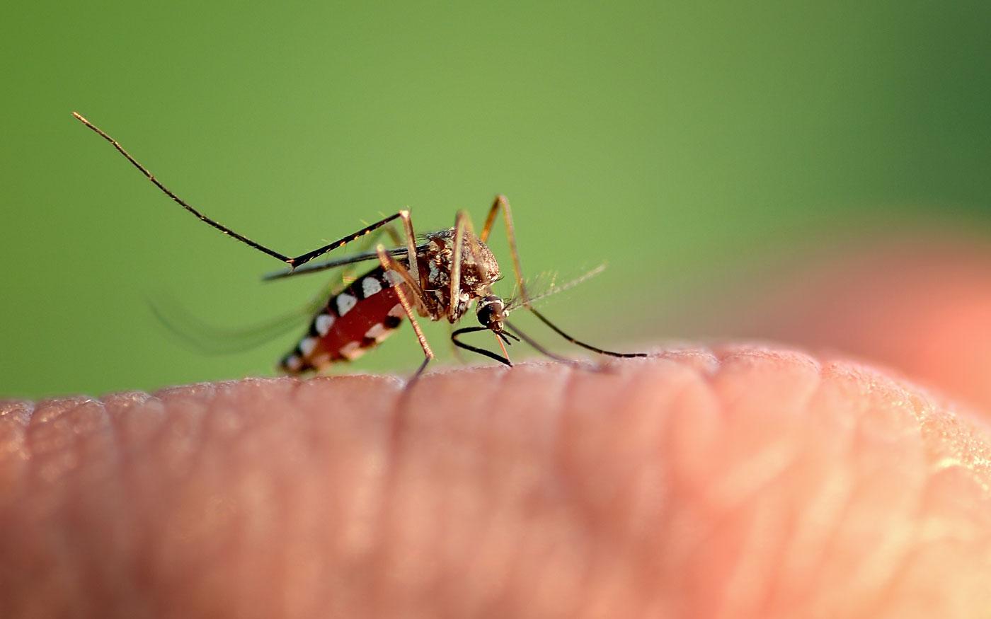Már javában tart a szúnyogok elleni védekezés