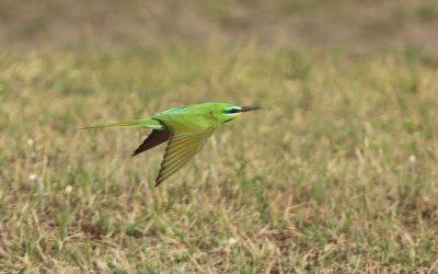 Hazánkban eddig nem látott madarat fotóztak térségünkben