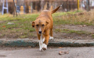 Közterületen kizárólag pórázon sétáltatható kutya!