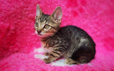 Fiatal cicáknak keresnek szerető családot Dunaharasztin