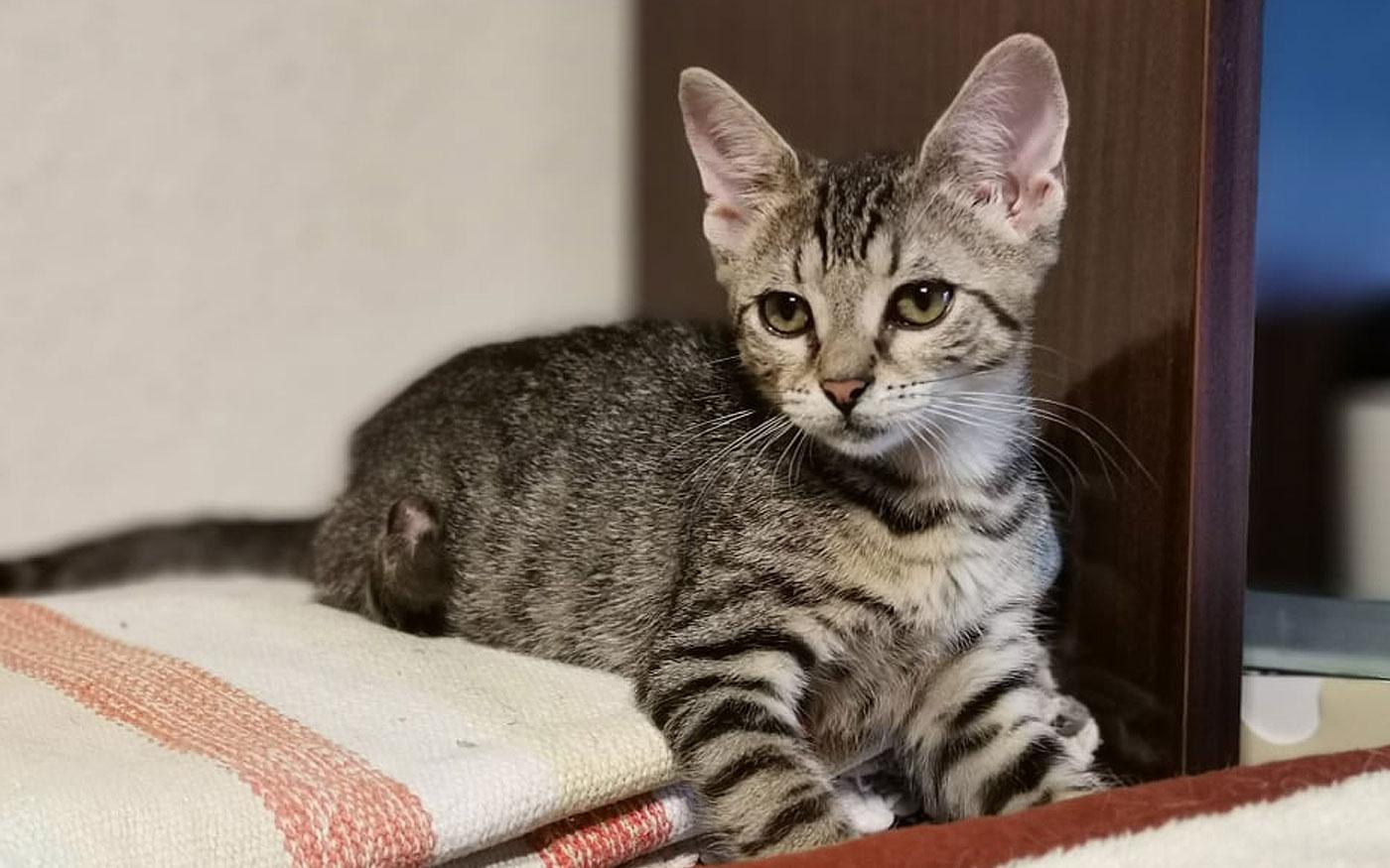 Szebbnél szebb cicák várják az álomgazdit