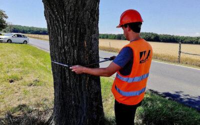 Különleges műszerrel les be az útmenti fák belsejébe a Magyar Közút