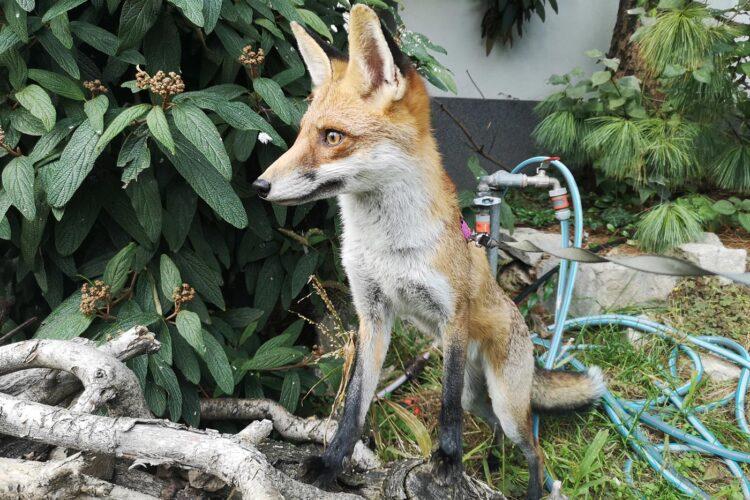 Fotók: Tüskevár Vad és Egzotikus Állatvédő Alapítvány