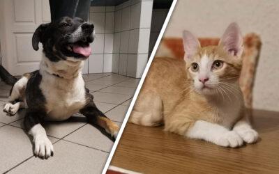 Streetboy Joe a kutya és Ketchup a cica
