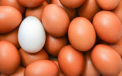Népszerűsítik a tojást