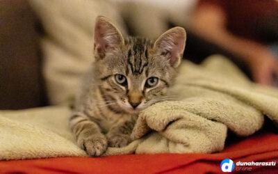 Országos szintű, kutya-macska ivartalanítási program jöhet