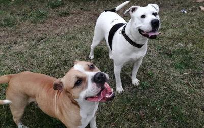 Karácsonyi csodára vár két gyönyörű kutya