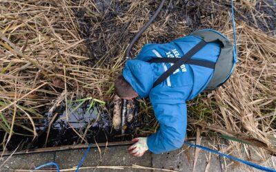 Óriási erőfeszítés a szigetszentmiklósi olajszennyezés ellen