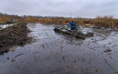 Ismét állatokat mentettek az olajszennyezett szigetszentmiklósi úszólápból