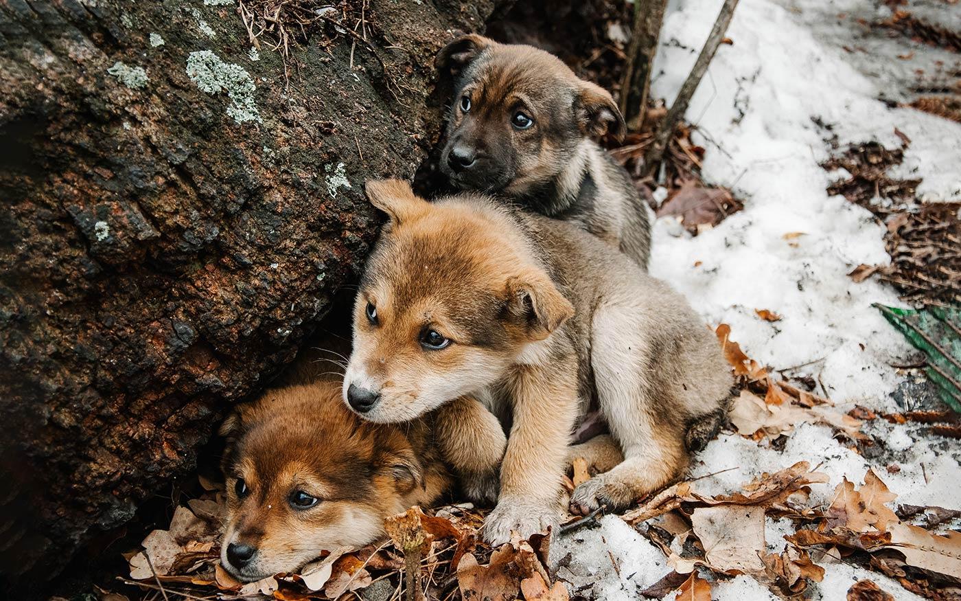 Az állatokra is jobban kell figyelni a nagy hidegben