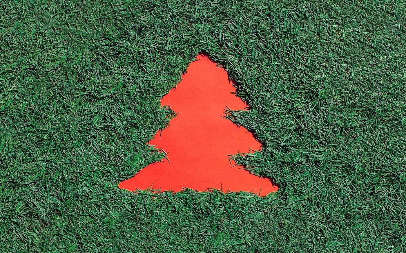 Szerdától kezdik elszállítani a karácsonyfákat