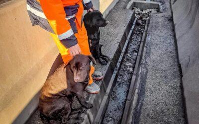 Kutyákat mentettek az M0-ról
