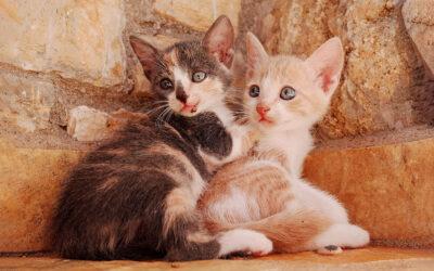Kutyák, macskák és törpe malac is csatangolt szilveszterkor Dunaharasztin
