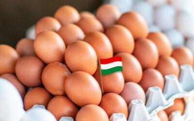 Nemzeti színű zászlót kap a tojás
