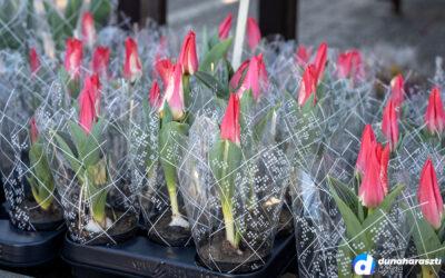 Rengeteg virág a nőnap előtti piaci kínálatban