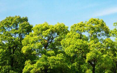 Jövő tavasszal érkezhetnek az új fák a Némedi útra