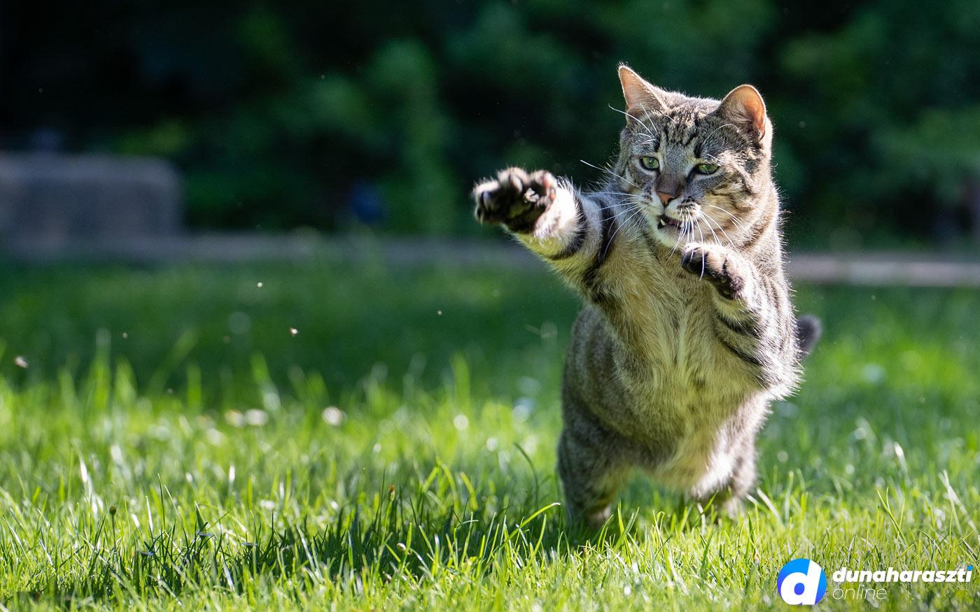 Augusztus 8-a a Macskák Nemzetközi Napja