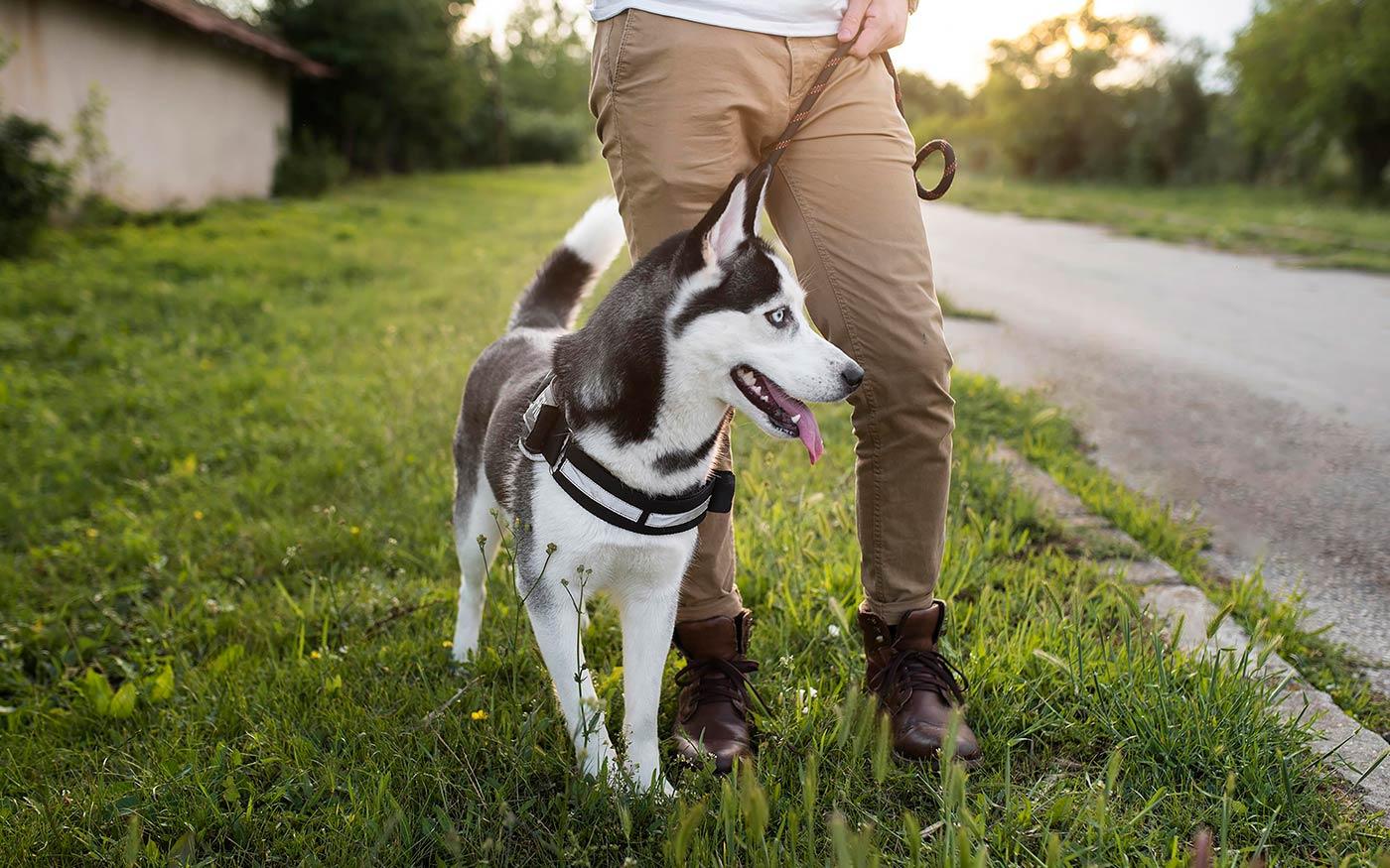 Dunaharaszti területén sem lehet póráz nélkül sétáltatni a kutyákat
