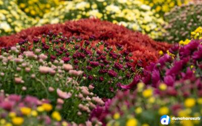 A virágosokat ellenőrzi a térségben a NAV